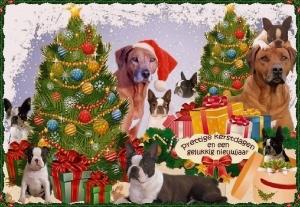 kerst_nieuwjaarswens2014